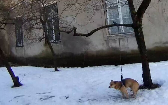 Собаку привязали и бросили.