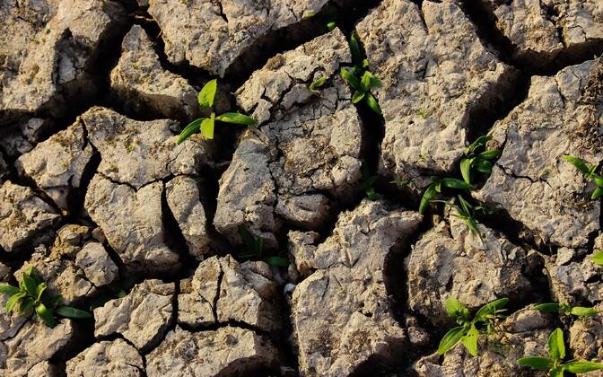 Inimtegevus on üks peamisi põhjusi, miks mullaviljakus langeb.