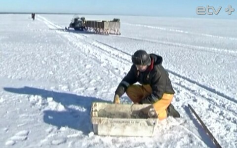 Рыбаки против введения индивидуальных квот на ловлю рыб в Чудском озере