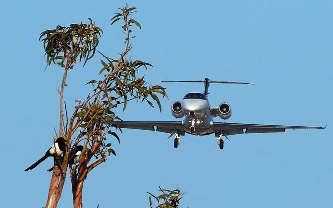 Lennuväljade lähedusse sattuvad linnud ohustavad ka tsiviillennukeid.