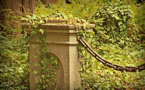 Кладбище. Иллюстративная фотография.