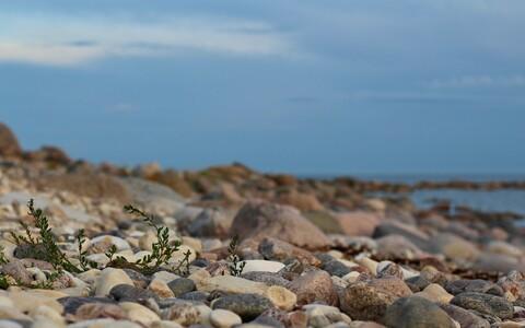 Eesti rand.