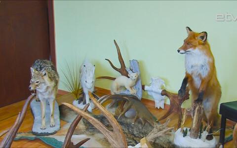 Оценка охотничьих трофеев – часть национальной культуры Эстонии.