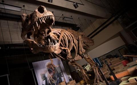 Scotty on teadaolevalt maailma suurim türannosaurus.