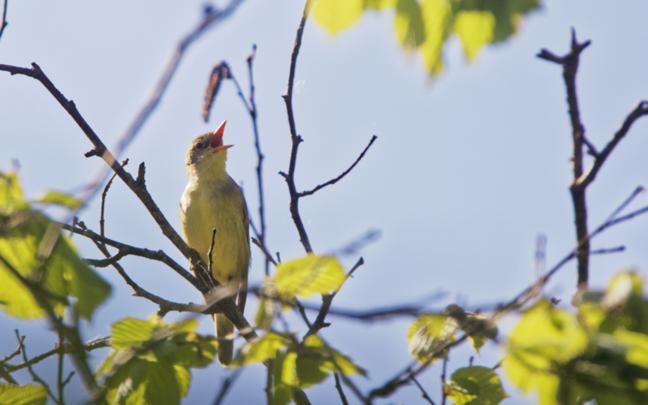 Linnulaul on loodusmaastiku lahutamatu osa.