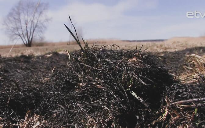 С приходом хорошей погоды увеличивается пожароопасность в лесах.