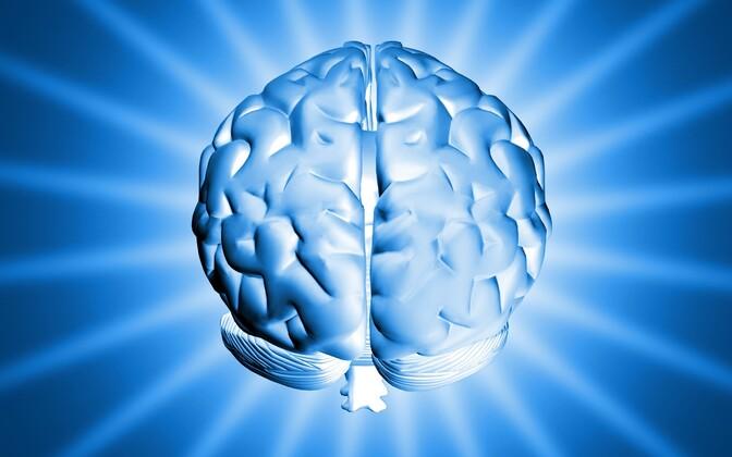 Tulemuste põhjal pole vähemalt mõned vanusega seotud muutused ajus pöördumatud.