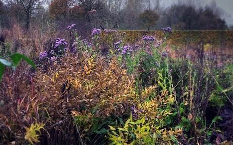 """""""Viis aastaaega: Piet Oudolfi aiad"""""""
