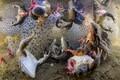 Parimal loodusfotol, mille autoriks on Bence Mate, on näha vigastatud konnad, kes on visatud vette. Pilt on tehtud Rumeenias Covasnas, kus osa kohalikke teenib raha konnajalgade müügiga.