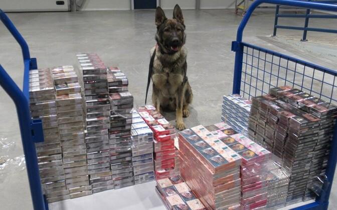 Служебный пес Тайсон нашел контрабанду.