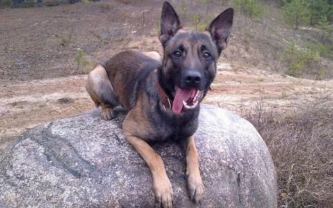 Служебный пес Феликс.