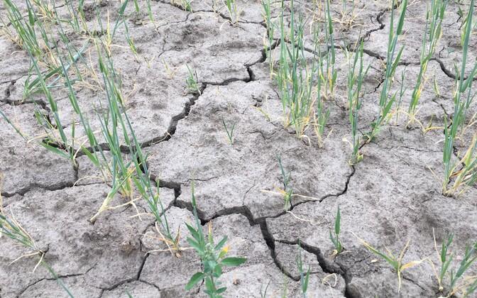 В прошлом году засуха длилась три месяца.