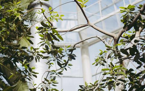 Таллиннский ботанический сад.