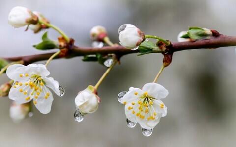 Vihmane kevad