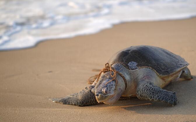 Paljud liigid on inimeste tõttu väljasuremisohus.