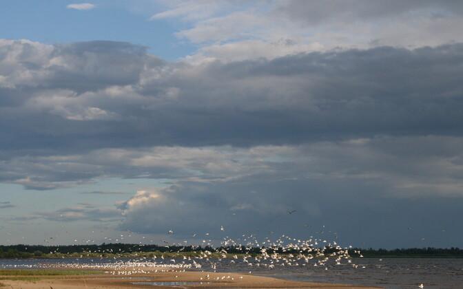Парковку у пляжа в Васкнарве можно будет оплатить только при помощи мобильного телефона.
