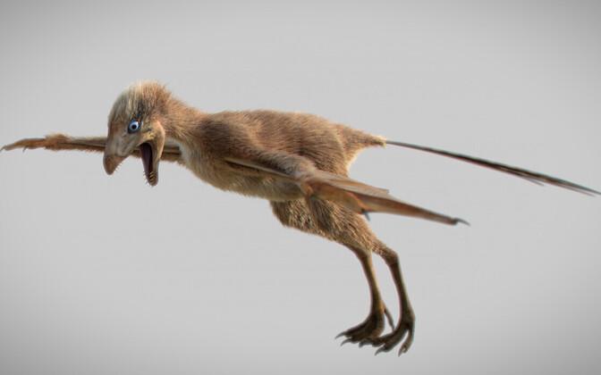 Dinosauruse Ambopteryx longibrachium rekonstruktsioon.