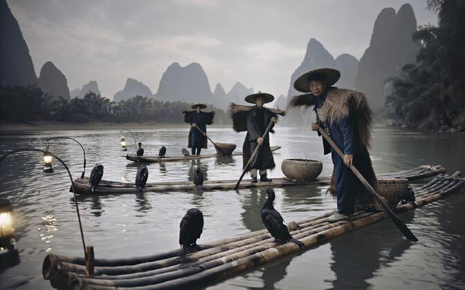 Бакланы в Яншо, Китай, 2005.