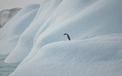 Pingviin - täitsa üksi