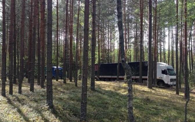 В Псковской области задержали 9 фур с польскими яблоками.