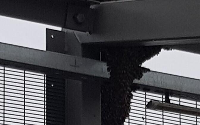 Пчелы на мосту