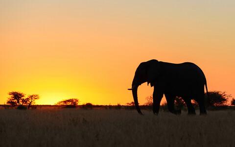 Suuremaid loomi sureb maailmas välja rohkem kui pisemaid.