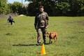 Соревнования служебных собак на Сааремаа.