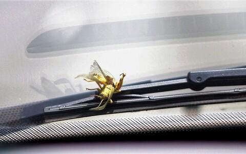 Suvel on putukad tülikad nii mootorratturitele kui ka autojuhtidele.