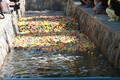 Pardirallil läks rajale 15 000 vanniparti