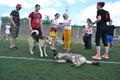 Шествие собак.