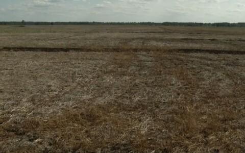 Taimemürk rikkus rohunepi pesitsusala.