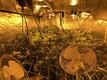 Наркотические растения выращивали на складе в Мустамяэ.