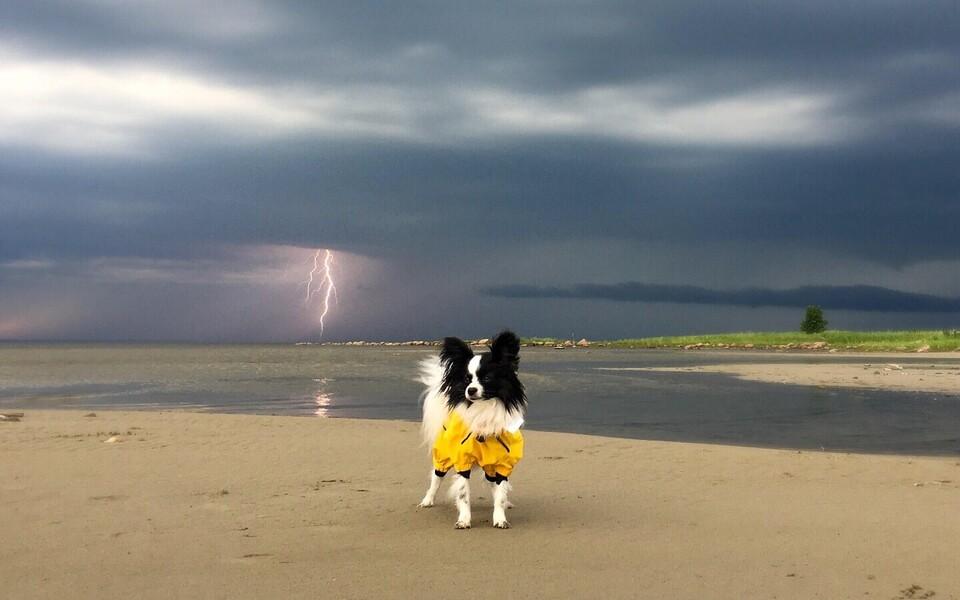 Молния и собачка.