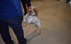 78ced830420 Maksu- ja tolliamet võttis illegaalsete saadetistega võitluseks appi  koerad, kelle paremaks treenimiseks sõlmiti leping kullerfirma DPD-ga.