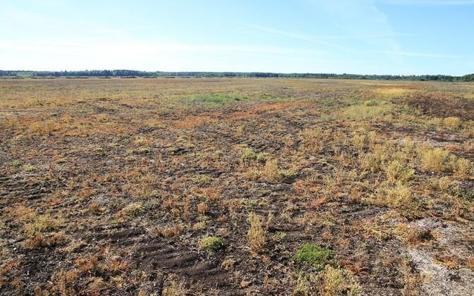 Mürk hävitas rohuneppide pesitsusalal Korva luhal taimkatte.