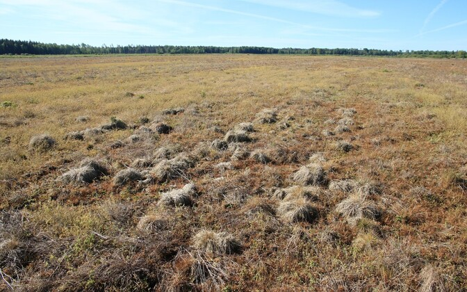 The crop desiccant sprayed on the fields completely destroyed a large nesting area.