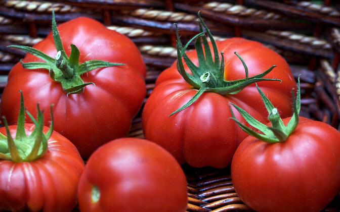 Ежегодно предприятие Sagro производит 5600 тонн овощей и 1500 тонн картофеля. Иллюстративная фотография.