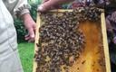 Mesilased.