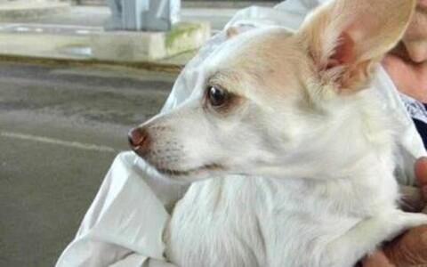 У собаки не оказалось необходимых для пересечения границы документов.