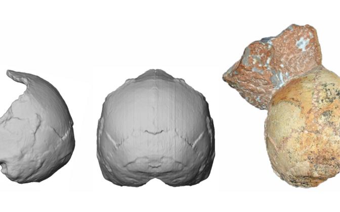 Apidima 1, ligikaudu 210 000 aasta vanuse nüüdisinimese kolju ja selle rekonstruktsioon.