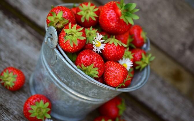 Клубника каждое лето становится основным лакомством для жителей Эстонии, но зачастую бывает, что под видом отечественной ягоды на прилавках лежит иностранная. Иллюстративная фотография.