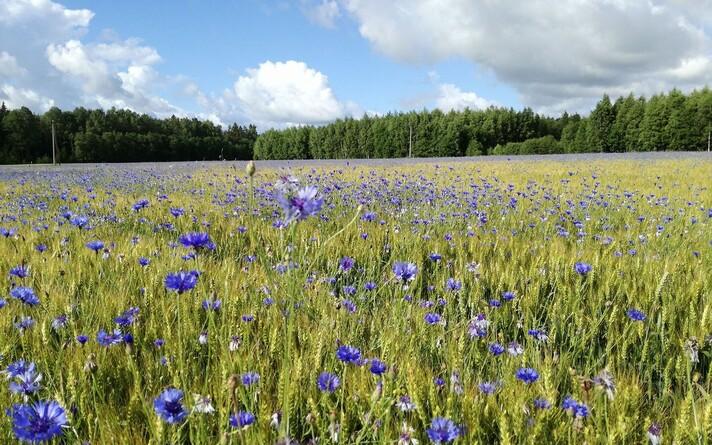 С 2006 года Эстония экспортирует зерновые, как правило, половину всего урожая.