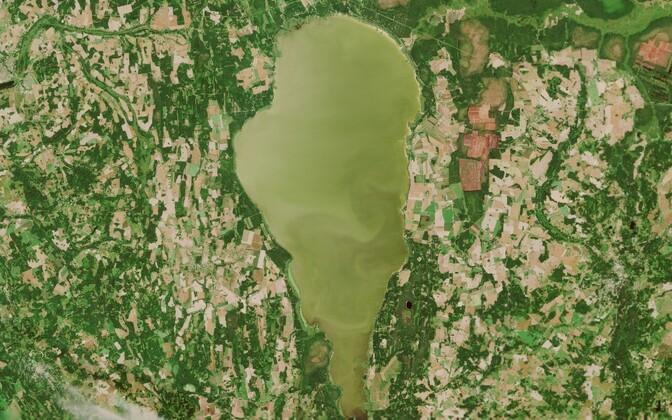 Satelliidipilt Võrtsjärvest 29. juulil.
