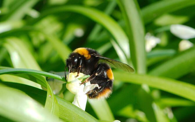Использование ядовитых для пчел гербицидов не допускается в период цветения растений.