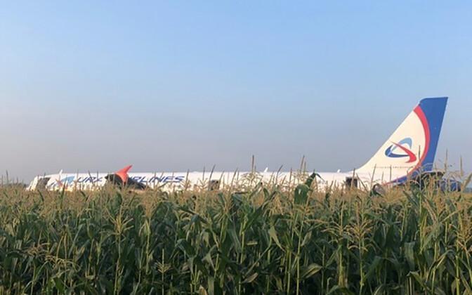 ЛАйнер столкнулся со стаей чаек и совершил экстренную посадку на кукурузное поле.