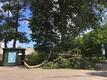 Упавшая ветка в Кадриорге.