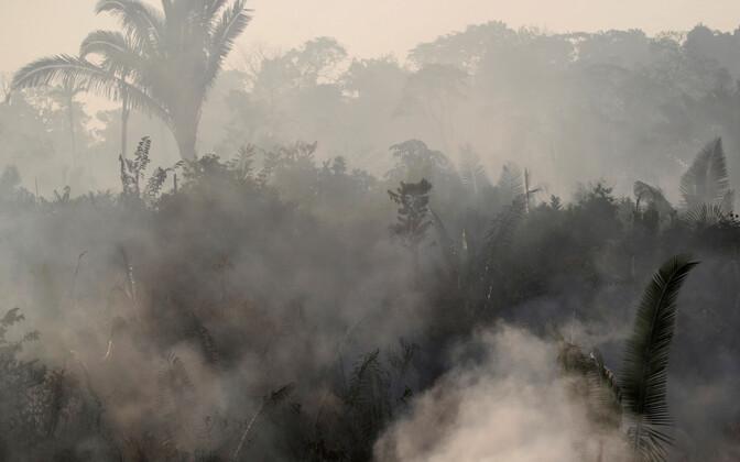Põleng vihmametsas Humaita lähistel 14. augustil.