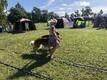 Haapsalu koertenäitus