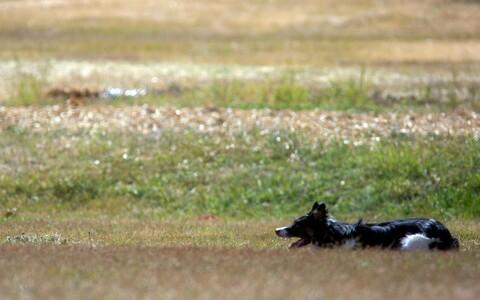 В Норвегии среди собак распространяется неизвестное заболевание. Иллюстративная фотография.