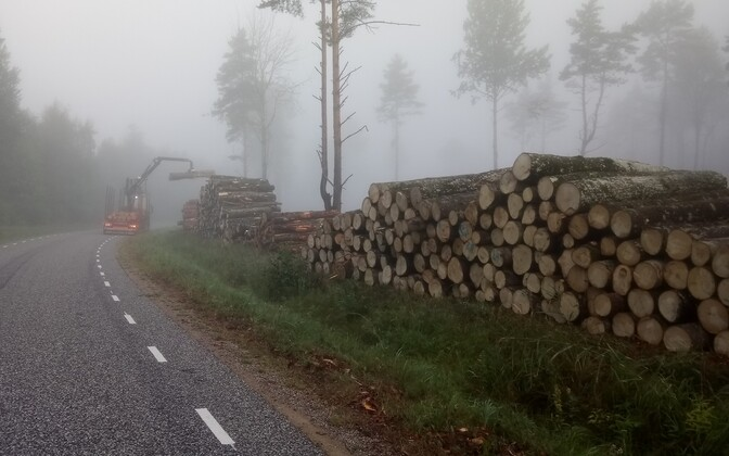 Logging work underway in Vasknarva, Ida-Viru Countty.
